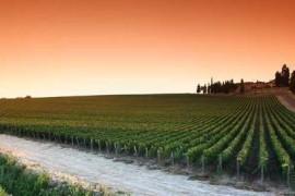 valpolicella_wine_consortium