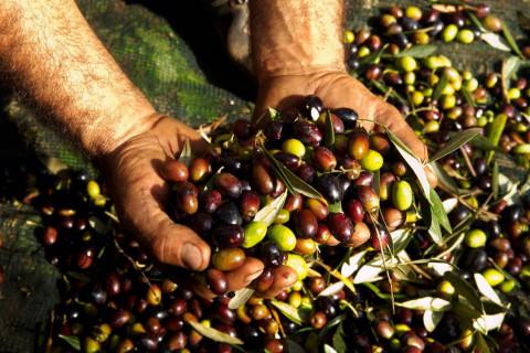 italian-agriculture