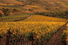Tuscan-wine